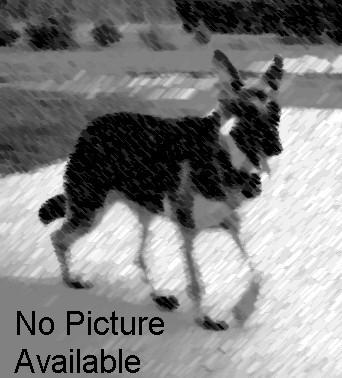 nopicture.jpg